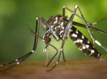 zika2_1000_750
