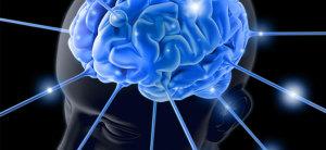 El-cerebro-del-hombre2