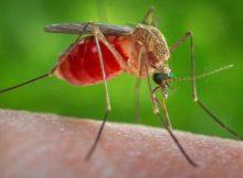 Mosquito1-1024x575