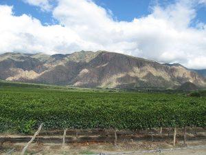 800px-Cafayatemountains viñedos
