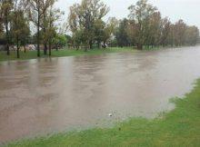 inundados-pergamini-verdad