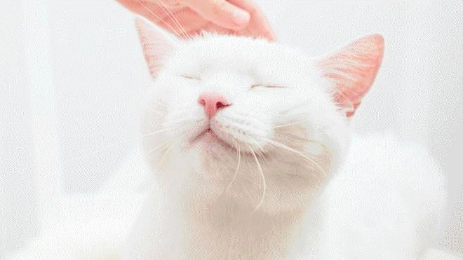 noticia-1550663907-dia-internacional-del-gato
