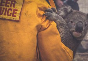 koala-se-salva-de-incendio-807336